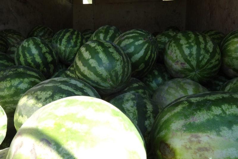 Неменее 18 тонн подкарантинных яблок изРеспублики Казахстан развернули наоренбургской границе