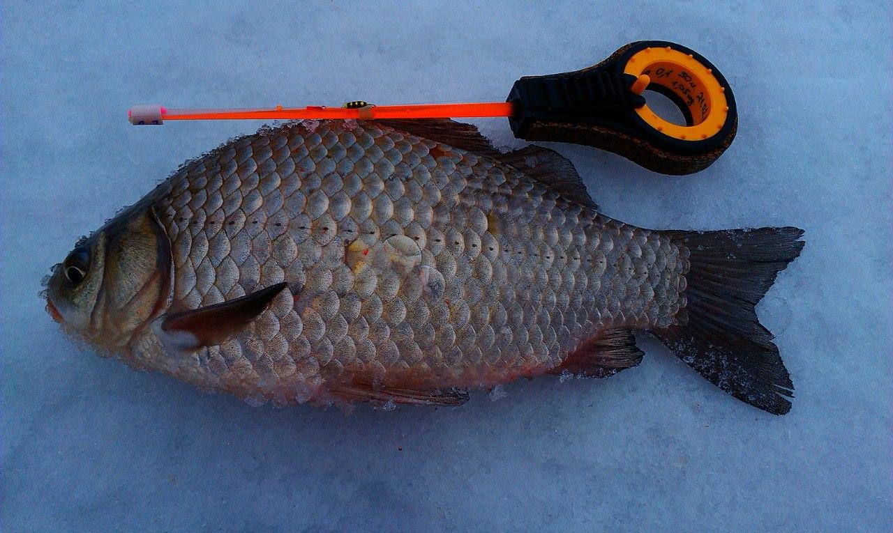 я рыболов в оренбурге