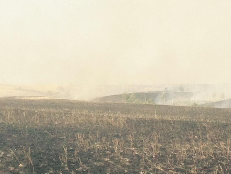 ВОренбургском заповеднике горела сухая трава