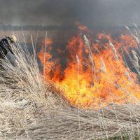 В Оренбургской области за сутки выгорело около 30 гектаров сухой травы