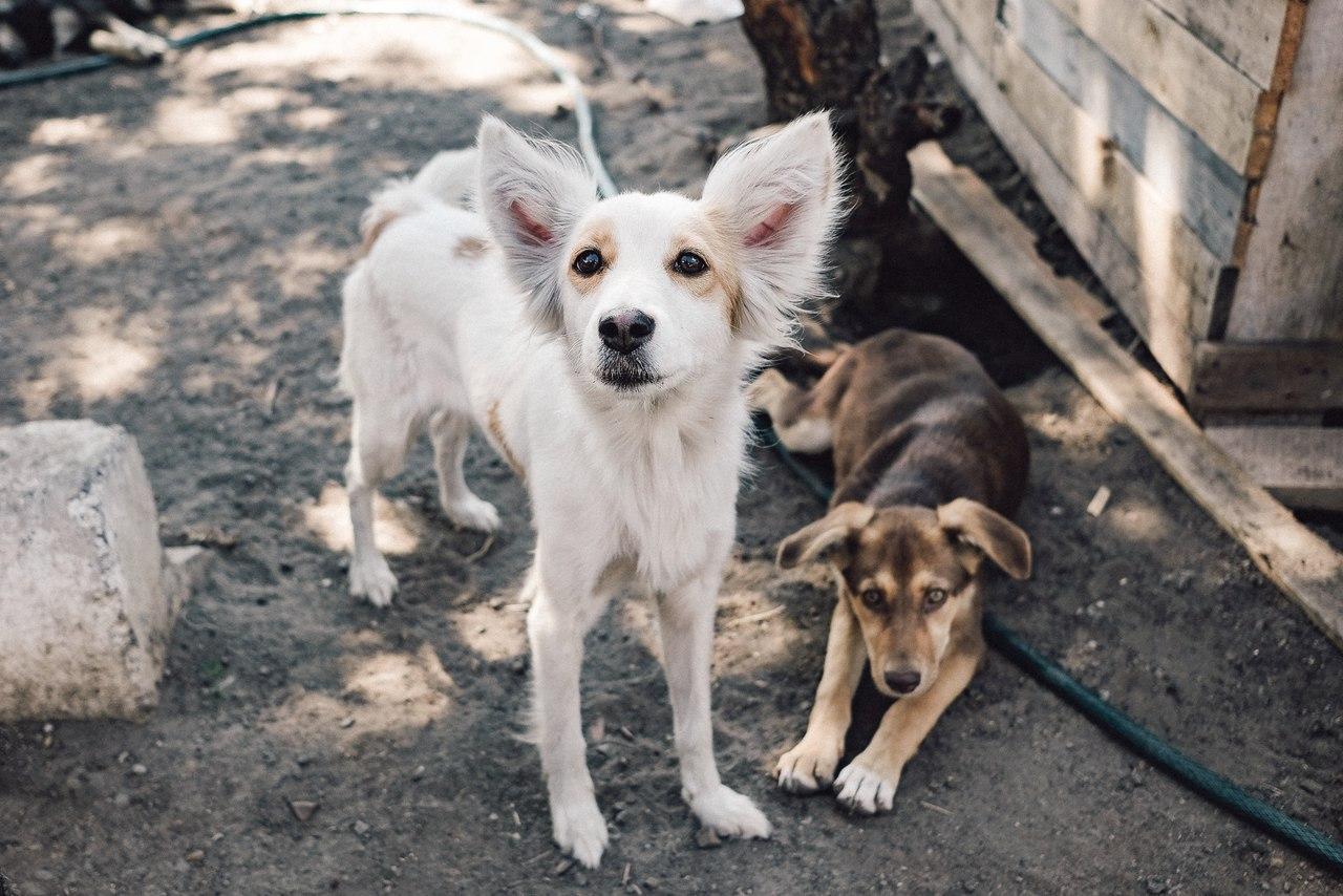 картинки с бездомными животными для сайта если сюда