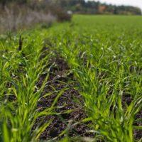 Аграриям Оренбуржья компенсируют часть затрат на солярку и бензин