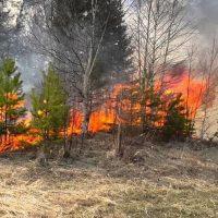 Пятый класс пожарной опасности объявлен двух районах Оренбуржья