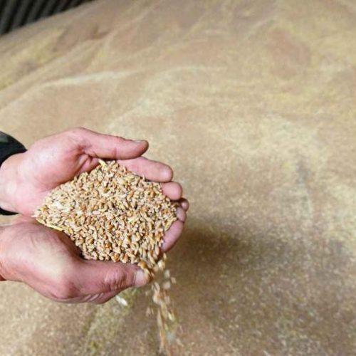 Оренбургских аграриев могут лишить субсидий из-за низкого качества зерна