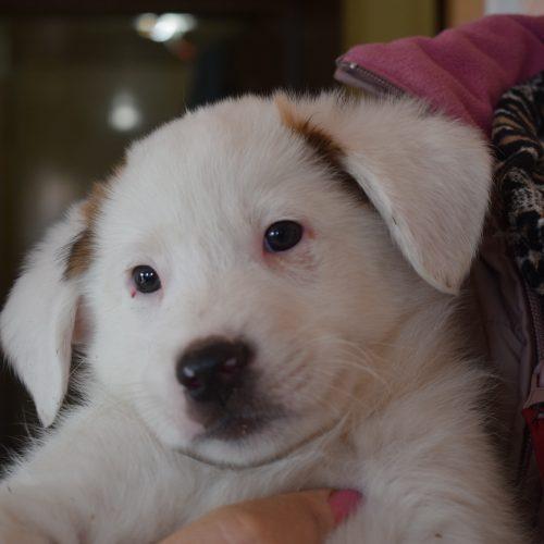 Собачьи истории: подкидыши, спасённые от смерти