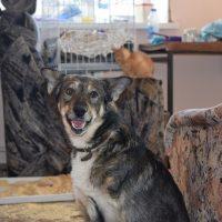 Собачьи истории: не такие как все — три лапы и любовь