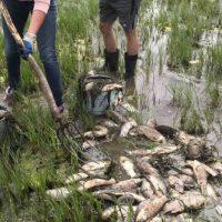 В Оренбуржье не нашли причин массовой гибели рыбы на Ириклинском водохранилище