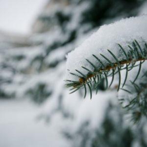 «Мягкая и снежная»: Россиянам рассказали, какой будет предстоящая зима