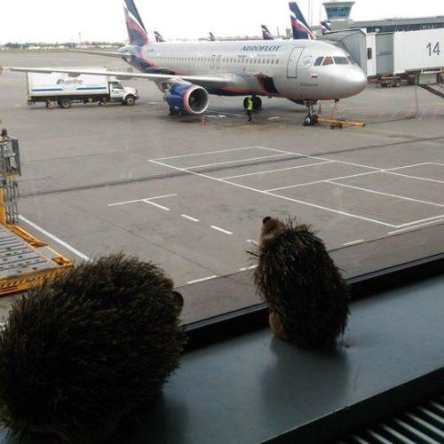 Авиарейс FV6171 не смог вылететь из Москвы из-за тумана в Оренбурге