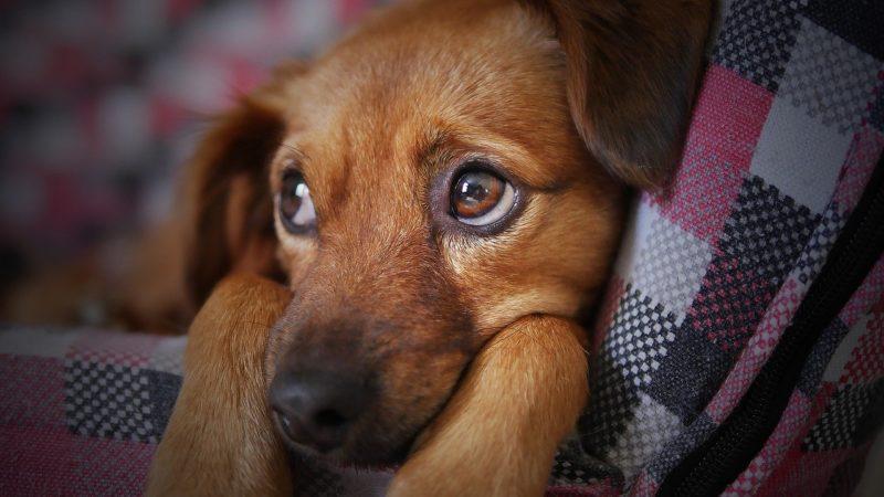 Бездушные харьковчане выбросили маленького щенка в мороз на улицу ... | 450x800