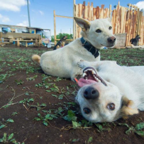 Приют для бездомных животных на 300 мест строят волонтеры в Оренбурге