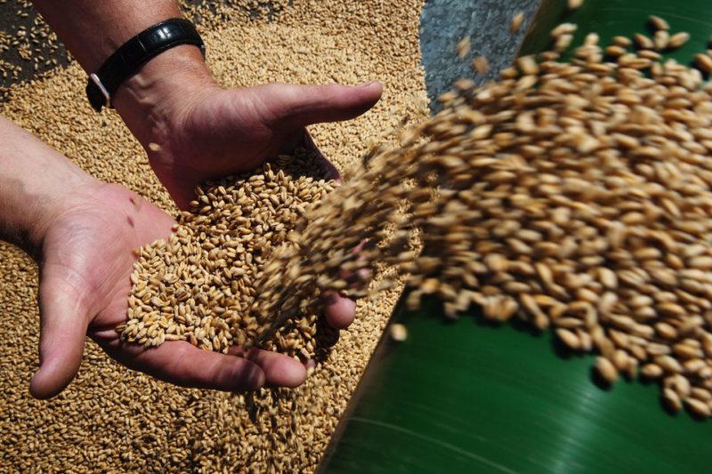 В оренбургском селе Кардаилово запустили новый зерносушильный комплекс