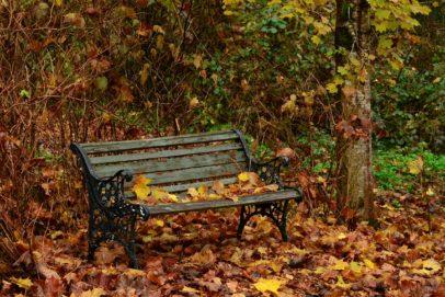 В лесопарке на улице Березка в Оренбурге горожане смогут установить именные скамейки