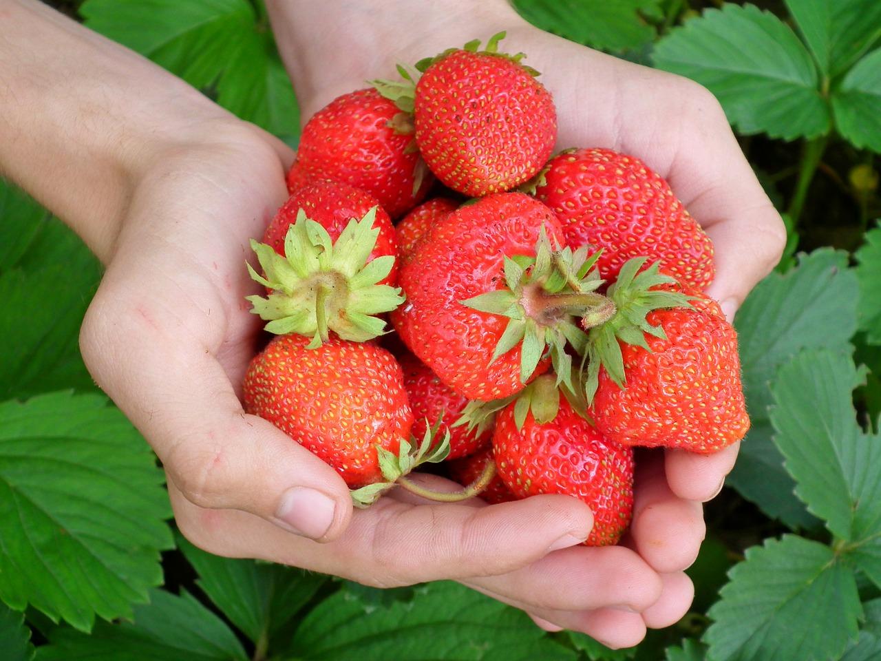 В теплицах Ташлинского района будут выращивать ягодное ассорти