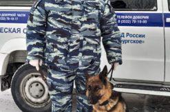 Трехлетняя овчарка Нивея под руководством кинолога Руслана Сагитова взяла след и провела полицейских до подъезда многоквартирного дома