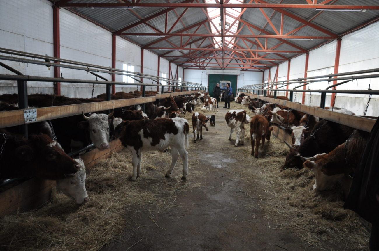 В Тюльганском районе семейная животноводческая ферма развивается за счет грантов