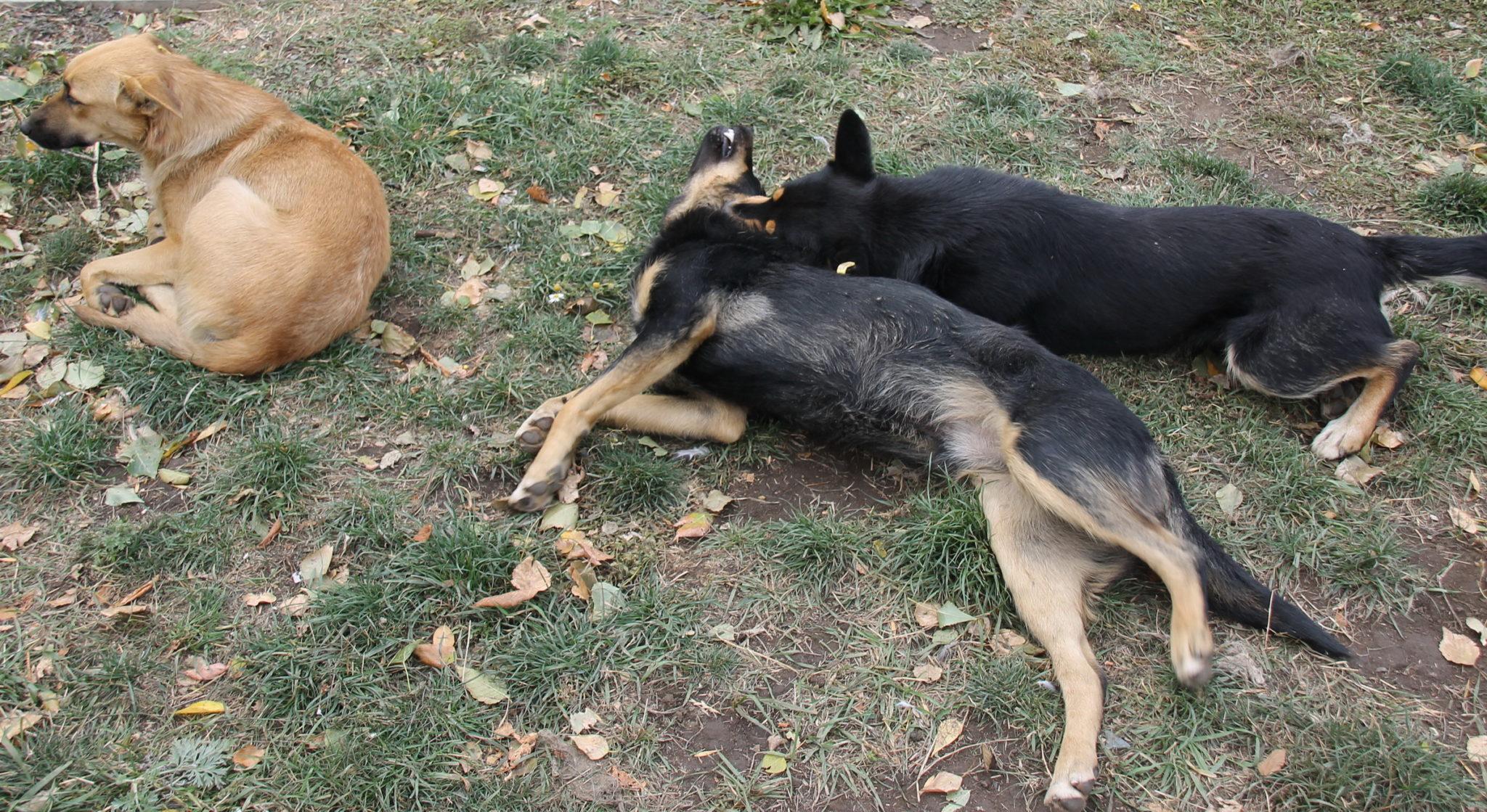 В Ясном приступили к отлову бездомных собак
