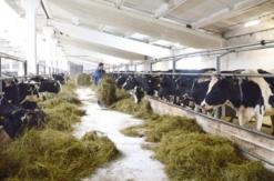 12 семейных ферм Оренбуржья получили гранты до 30 миллионов рублей