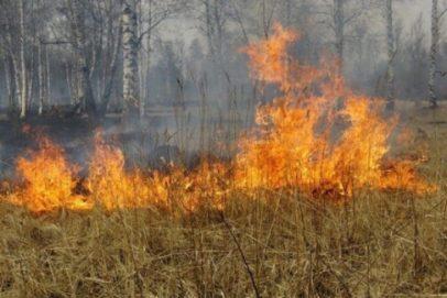 С начала мая в Оренбуржье зарегистрировано 83 природных пожара