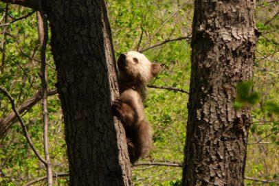 В Оренбуржье в заповеднике «Шайтан-Тау» проснулись медведи