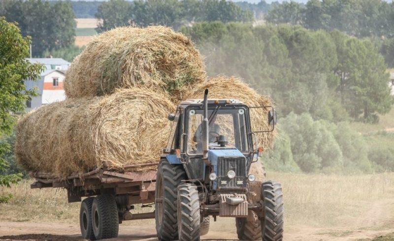 В хозяйствах Оренбургской области приступили к заготовке кормов