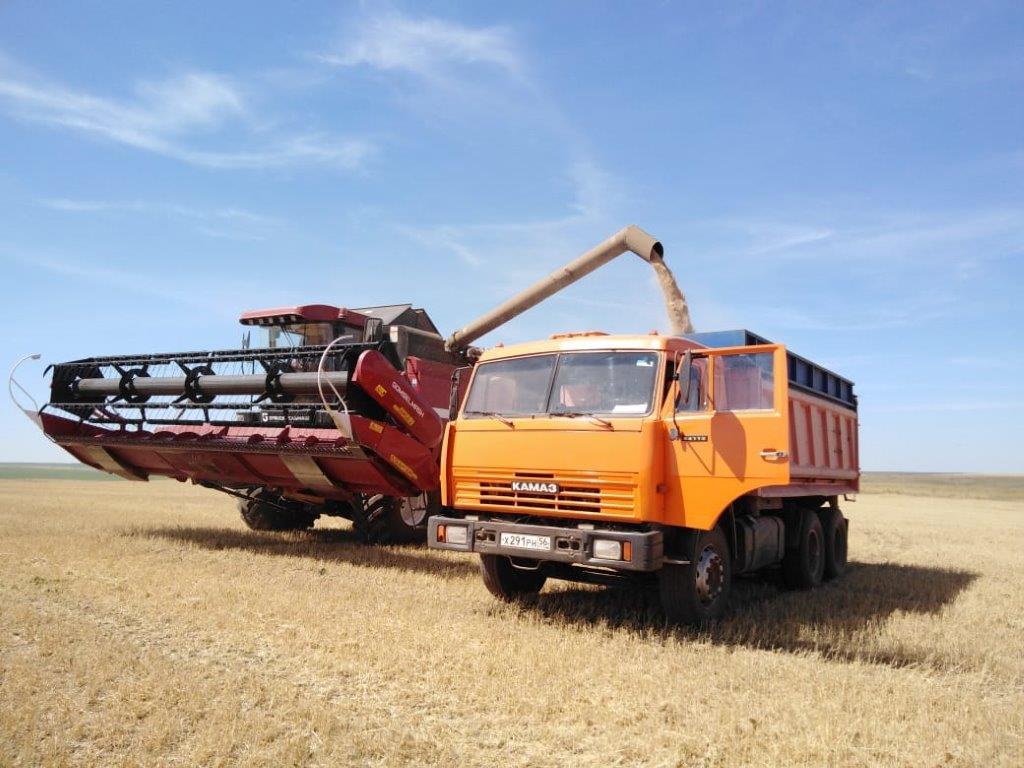 В Александровском районе завершилась уборка ранних зерновых